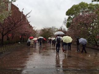 rainsakura0807