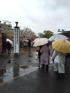 rainsakura0799