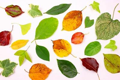 紅葉の楽しみ方3つのアイディア